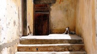 La soledad simbolizada en un perro maltratado por la vida.