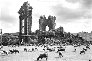 frauenkirche-ruinas-ovejas