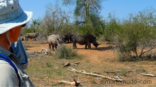 bella e intrepida aventurera observa los rinocerontes. Hlane Royal National Park-Swaziland