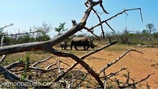 rinoceronte hembra con su cria. Hlane Royal National Park-swaziland