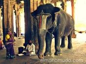 Venerando al elefante