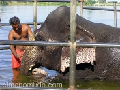 Lavando al elefante