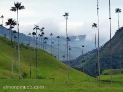 colombia. valle de cocora. palmas de cera del quindio