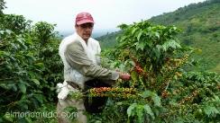 recolector de cafe en el eje cafetero.colombia