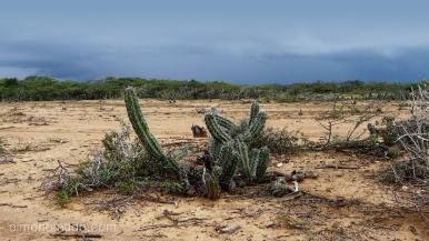 desierto. la guajira.colombia