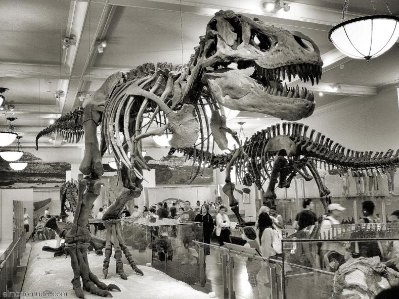 Dinosaurios 2008
