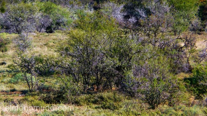 puedes ver el guepardo. kruger national park. sudafrica