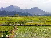 Arrozales en Sulawesi. Indonesia.