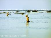 Recolectores de algas. Lombok. Indonesia.