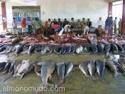 Mercado de pescado. Lombok. Indonesia.