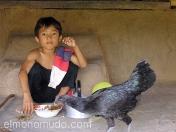 Joven con gallo. Bali. Indonesia.