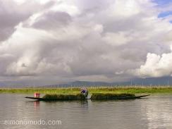 recogiendo la cosecha en las islas flotantes del lago inle. myanmar