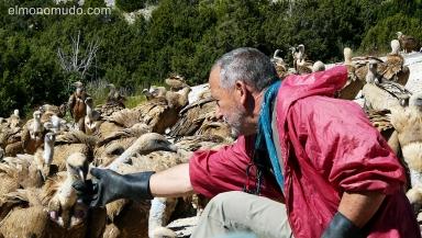 manuel aguilera sanz alimentando a los buitres en el muladar de santa cilia.huesca