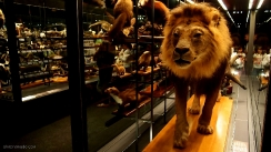 museo-nacional-de-historia-natural-barcelona-8