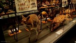 museo-nacional-de-historia-natural-barcelona-11