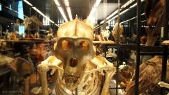 museo-nacional-de-historia-natural-barcelona-12