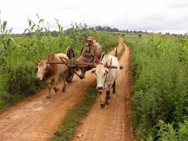campesinos. myanmar. birmania