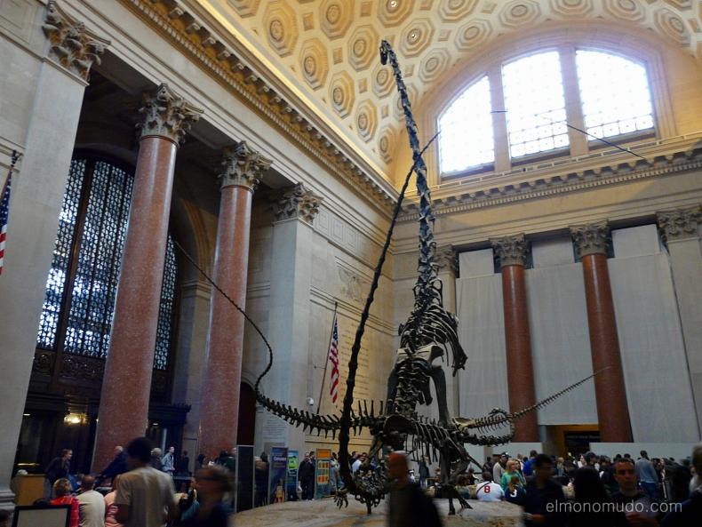 New York . American Mueum Natural History