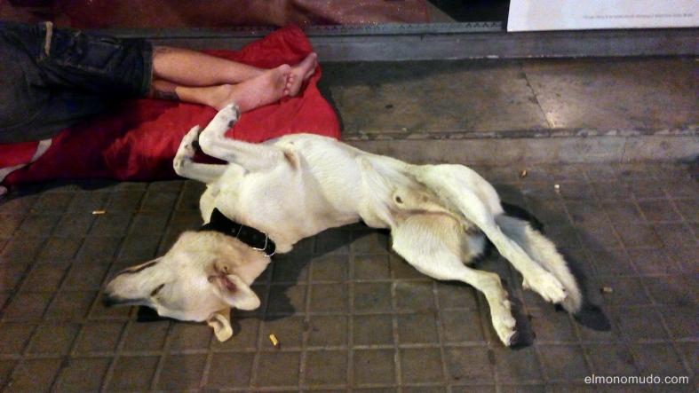 la extraña postura del perro a medianoche 2. the strange posture of the dog in the night-time 2