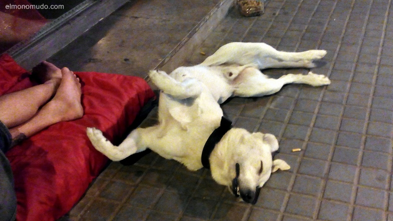 la extraña postura del perro a medianoche 3. the strange posture of the dog in the night-time 3