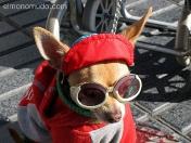perro con gafas de sol. ramblas de barcelona