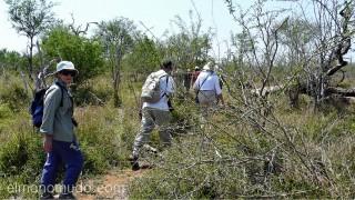grupo en fila al encuentro de los rinocerontes. Hlane Royal National Park-Swaziland