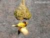 confeccion de un nido