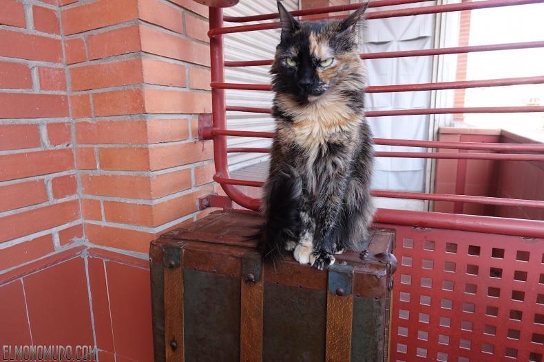 viejo-baul-con-gato