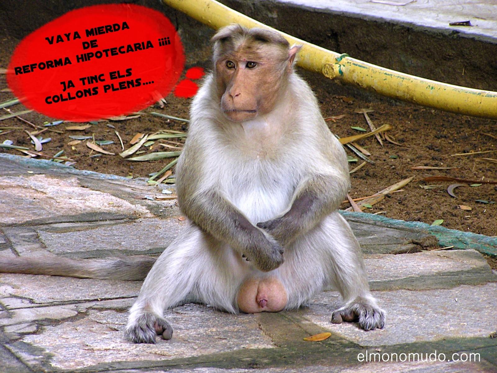 el mono que sabia demasiado
