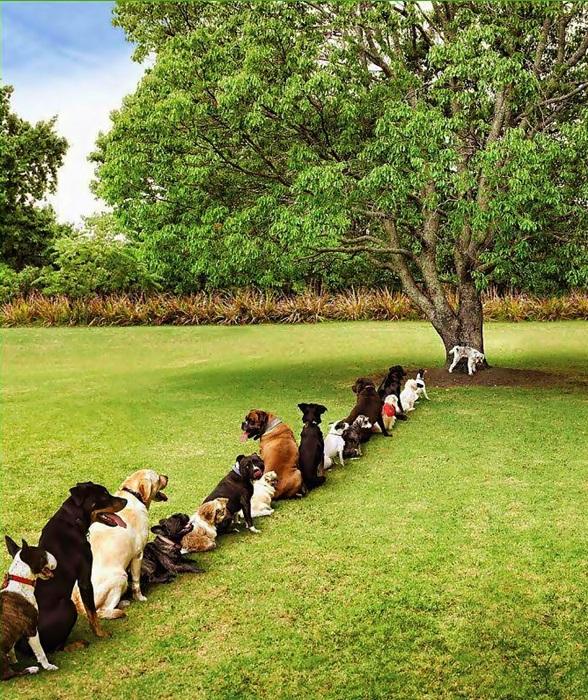 problema causado por deforestacion