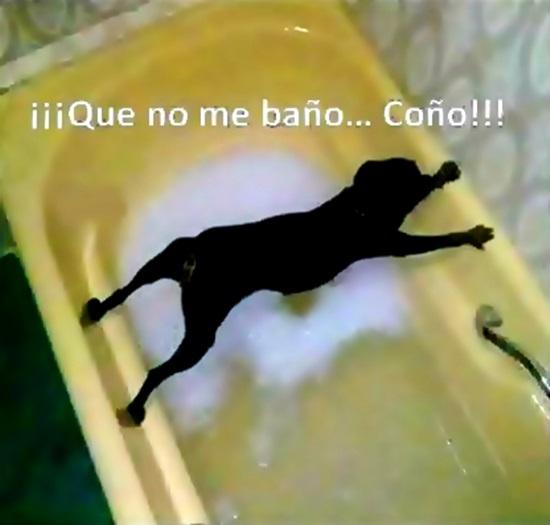 el perro que no queria bañarse