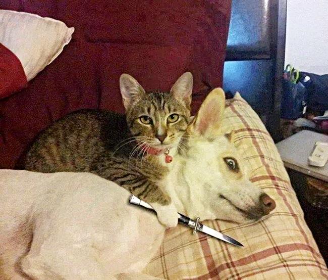 cuidado con los gatos 2