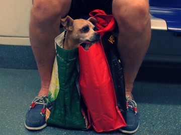 Perro en bolsa 1800x1344